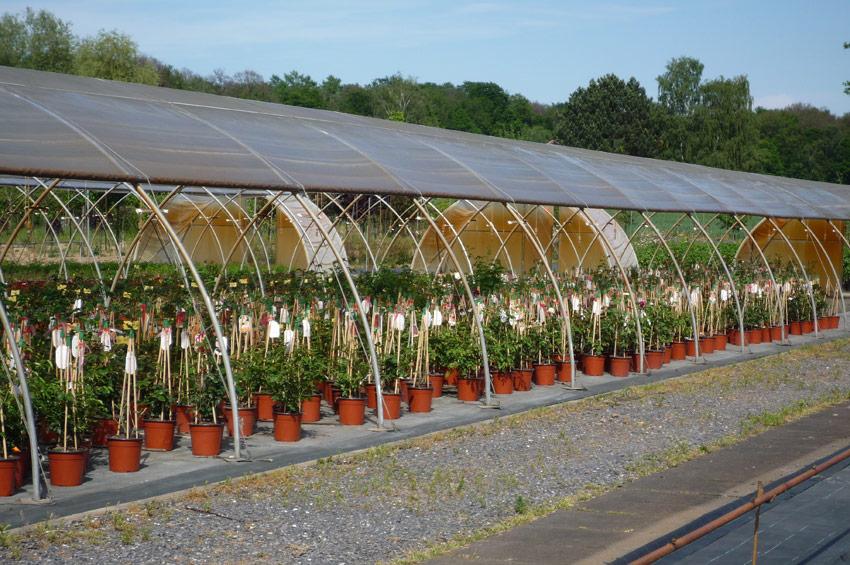 pflanzen-wiederverkaeufer-1