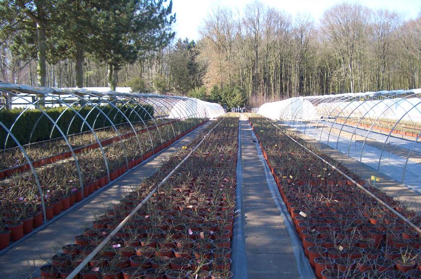 pflanzen-wiederverkaeufer-4